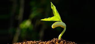 seedling1